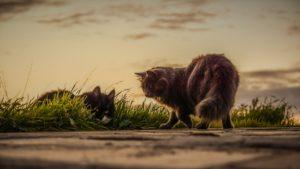 cats-3061372_1920