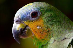 parrot-2756488_1920